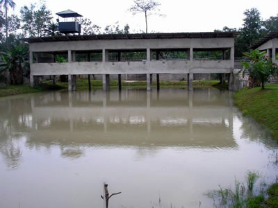 View of the fish pond